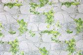 листья на каменные обои — Стоковое фото