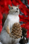 Scarecrow of squirrel with cone — Photo