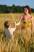 Mother gives ears in wheaten field to child — Stock Photo