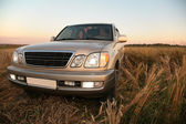 Car in wheaten field — Stock Photo