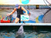 Photo de peintures de dauphin — Photo