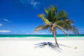 Coconut palm at beach — Stock Photo