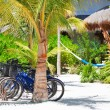 Bicycles at tropics — Stock Photo