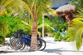 Bicycles at tropics — Stockfoto