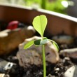 Yong plant growing — Stock Photo