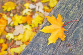 Beautiful autumn background — Stock Photo