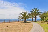 Walkway with palm trees — Stockfoto
