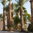 Eilat — Stock Photo #7304835