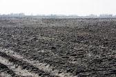 Plough land — Stock Photo