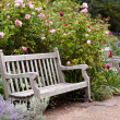 Rose garden in the park with wooden bench — Stock Photo
