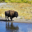 Foto de Stock  : In Yellowstone national park in USA