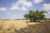 Dry grass and a tree — Stock Photo