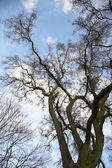 весна дерево. — Стоковое фото