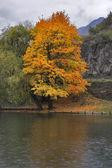 Orange tree. — Stock Photo
