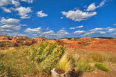 Dry bushes — Stock Photo