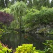 Pond in garden. — Stock Photo #7212849