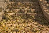 Steps. — Foto de Stock