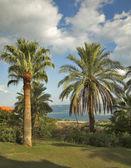 Palm trees at lake. — Stock Photo
