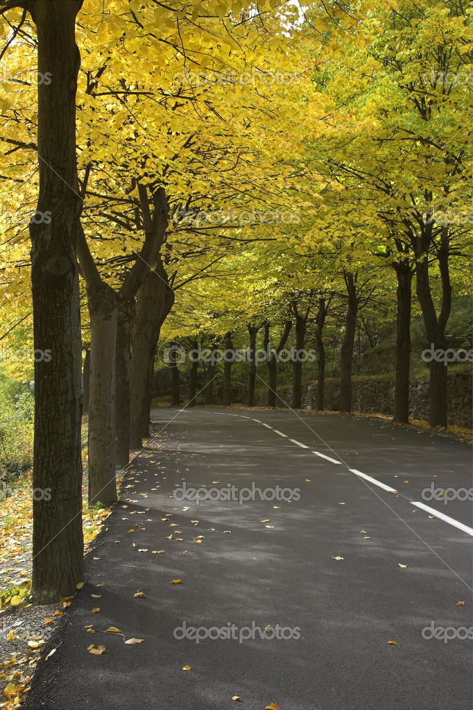 Highway, passing between autumn trees with yellow leaves  Stock Photo #7280188
