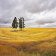 Huge thundercloud above a yellow field — Stock Photo #7304587