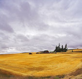 Huge thundercloud above a yellow field after harvesting. — Stock Photo