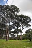 Fine green park — Stock Photo