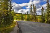 Fur-trees along the big road. — Stock Photo