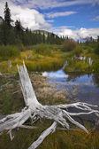Bog in mountains and snags on coast — Stock Photo