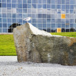 The seagull on a stone — Foto de Stock