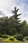 Fine green park in environs Madrid — Stock Photo