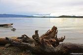 Le grand lac froid et des chicots — Photo