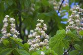 яркие цветы — Стоковое фото