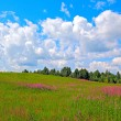 Summer landscape — Stock Photo #6765683