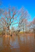 Flood in oak wood — Stock Photo