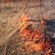 Fire in herb — Stock Photo #6804159