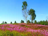 Kwiat na polu — Zdjęcie stockowe