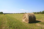 Hay in stack — Stock Photo