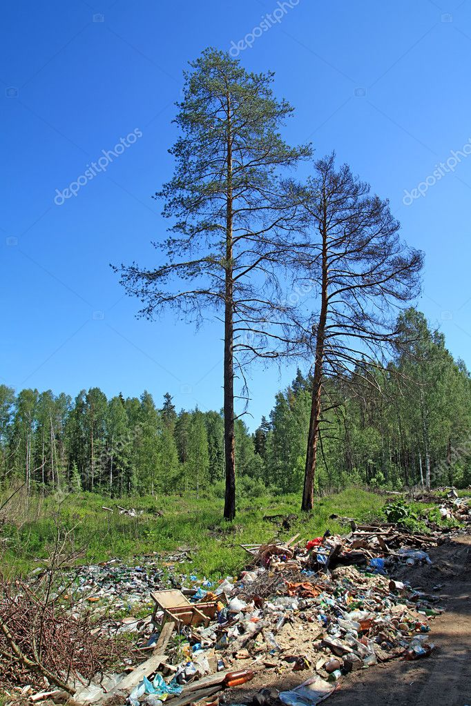 Garbage pit in pine wood — Stock Photo #6849090