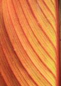 Autumn sheet tree — Stock Photo