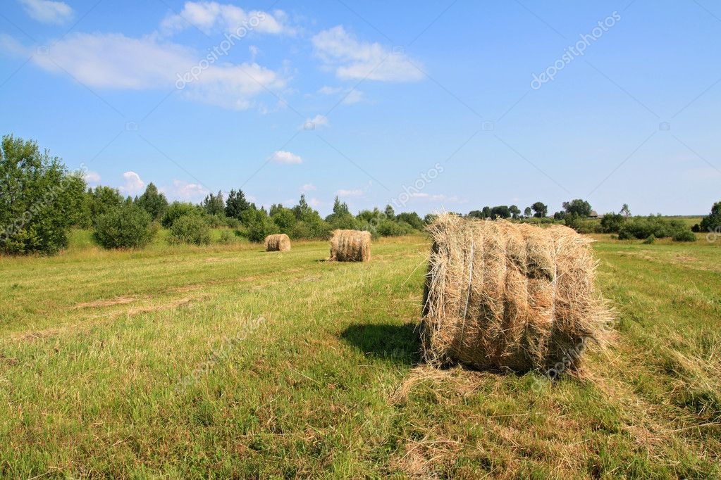 Hay on field — Stock Photo #6850084
