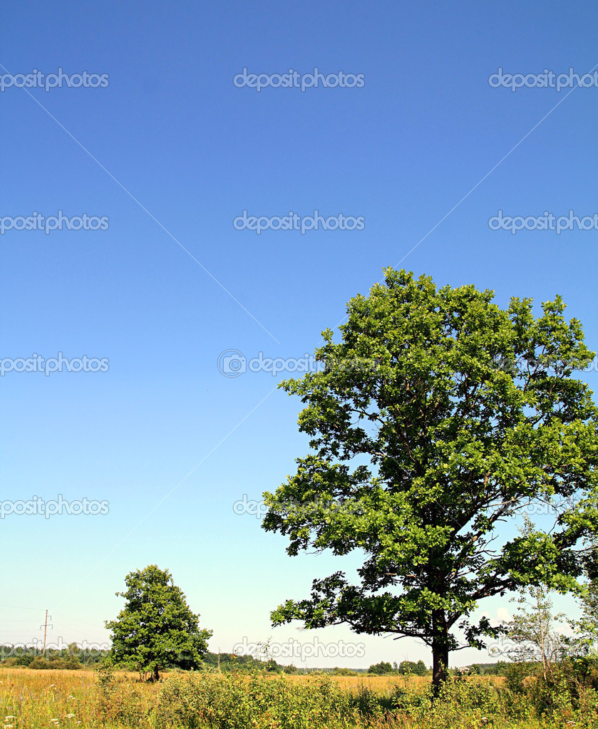 Green oak on summer field  Stock Photo #6850373