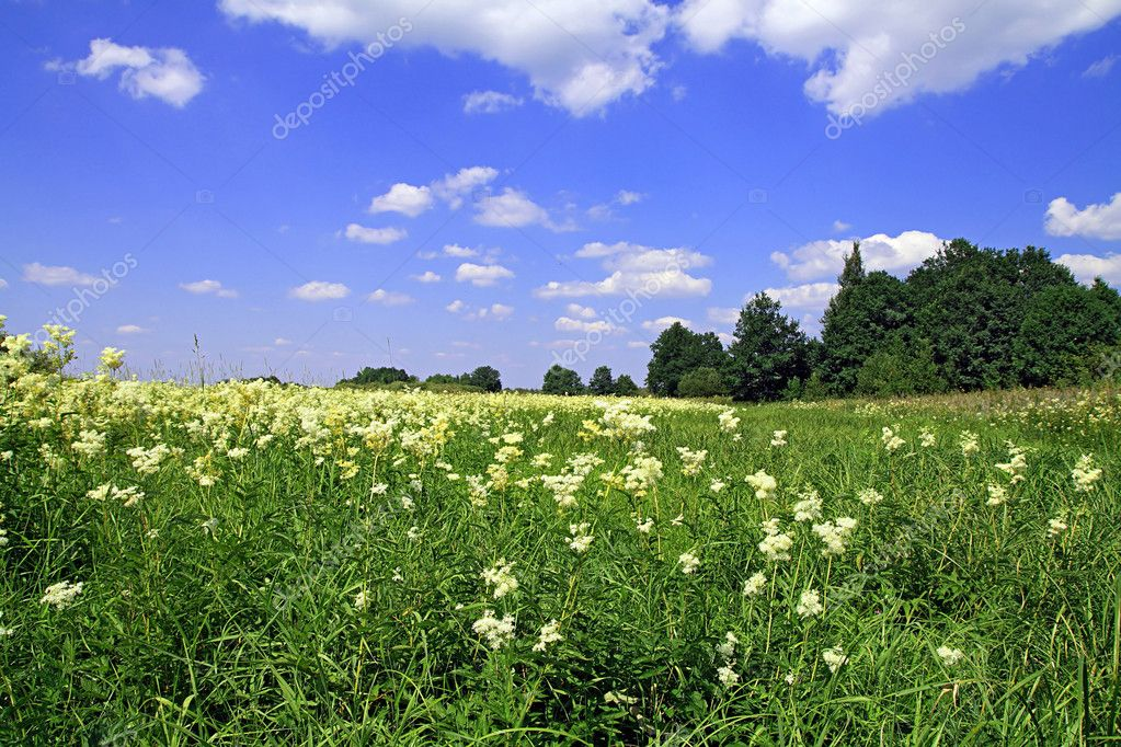 Summer field — Stock Photo #6850432