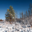 Winter landscape — Foto de Stock