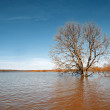 Big oak amongst spring flood — Stock Photo