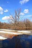 在木材中的春季洪水 — 图库照片
