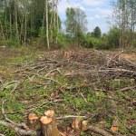 Chopping wood — Stock Photo