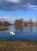 Three geese on river near villages — Stock Photo