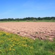 Plow field — Stock Photo