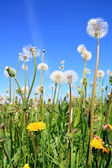 Field flowerses on summer field — Stock Photo