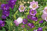 Summer flowerses amongst green herb — Stock Photo